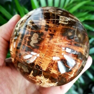 879g 86mm Natural Polished Petrified Wood Fossil Crystal Ball Specimen 2011