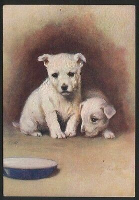 West Highland White terrier tobacco cigarette card postcard dogs 1930's #049