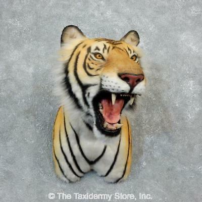 #18292 P | Reproduction Siberian Tiger Shoulder Taxidermy Mount