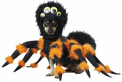 Pet Spider Medium