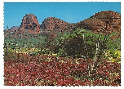 NT - c1970s POSTCARD - KATA MALU (THE DYING KANGAROO MAN) DOME, MT OLGAS GROUP