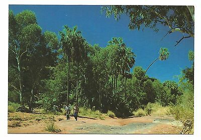 NT - c1980s POSTCARD- PALM VALLEY, FINKE GORGE NATIONAL PARK, NORTHERN TERRITORY