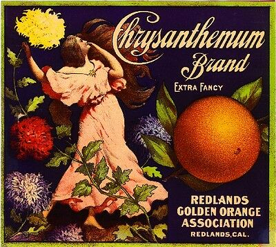 Redlands Chrysanthemum Flowers Orange Citrus Fruit  Crate Label Art Print