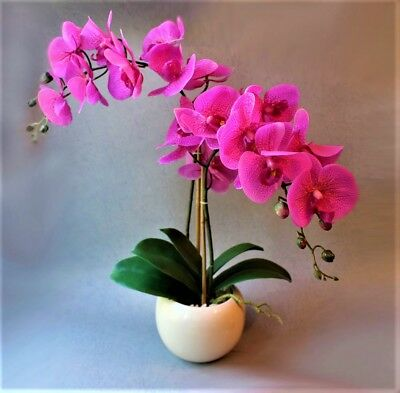 100 pcs Рink Orchid Flowers Seeds Bonsai Flowering Plant Potted Perennial