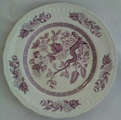 Royal Wessex White Ironstone By Swinnertons Made in England Indian Tree Plate
