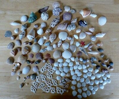 Collection of Sea Shells in good condition 182 in total