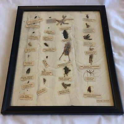 Framed Bug Collection Ant Moth Beetle Locust Fly Wasp