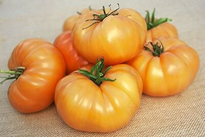20 Tomato Seeds KELLOGG'S BREAKFAST Heirloom Vegetable Organic Orange Beefsteak