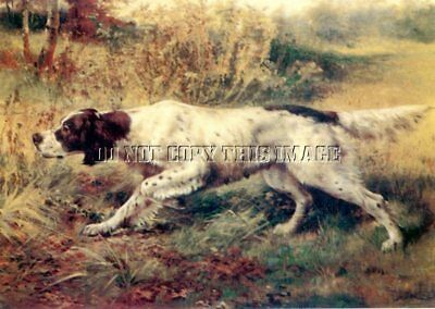 Antique Bird Hunting Repro 8X10 Osthaus Photo Print English Setter On Point