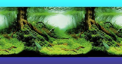 AQUARIUM BACKGROUND POSTER - AMAZON - 30cm 40cm or 60cm(H) - BUY by Lineal METRE