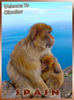 Gibraltar Spain Spanish Monkey Monkeys European Travel Advertisement Art Poster