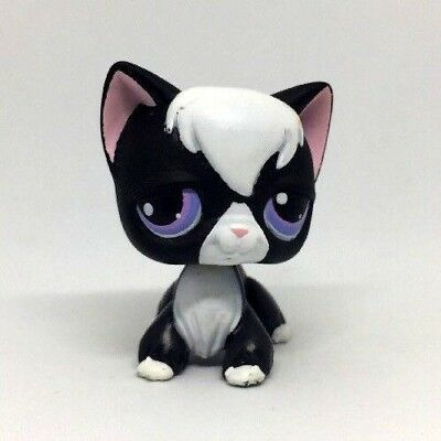 Black And White Cat With Purple Eyes