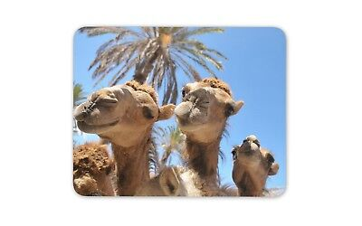 Funny Camels Mouse Mat Pad - Animal Cute Fun Camel Egypt Gift PC Computer #8543