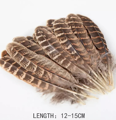 Bulk 50 Natural Female Pheasant Feathers 12-15cm DIY Craft Millinery Smudge Fan