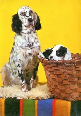 Oversize Postcard PC English Setter Mom & Puppy Dogs Spain c1950s Geocolor