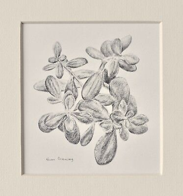 Money plant original contemporary still life drawing, to fit A4 frame