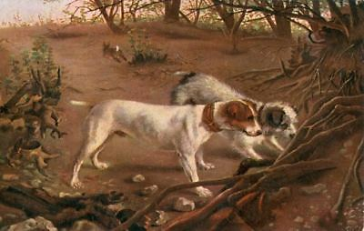 Old Postcard PC Smooth & Wire Jack Russell / Fox Terriers Germany c1908