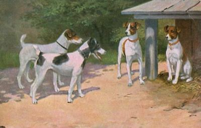 Old 4 Fox Jack Russell Terrier Dogs Art Portrait  Postcard PC Netherlands 1909