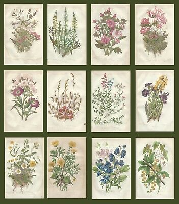 Lot of 12 ORIGINAL ANTIQUE 1855 ANNE PRATT FLOWER PRINTS GRASSES SEDGES FERNS 4