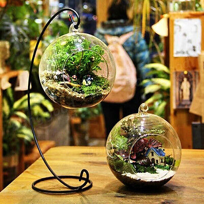 8cm Hanging Clear Round Ball Glass Flower Vase Planter Terrarium Container TOP
