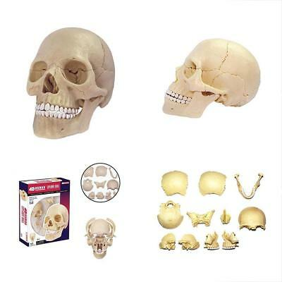 4D MASTER HUMAN Anatomy Exploded Skull Model 3D Puzzle Learning Toy ...