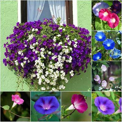 100PC/Set Mixed Wall Climbing Tricolor Morning Glory Seeds Creeper Plant Seeds