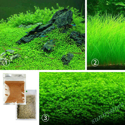 10g Water Grass Seeds Live Plant Fish Tank Aquarium Landscape Decor Ornament