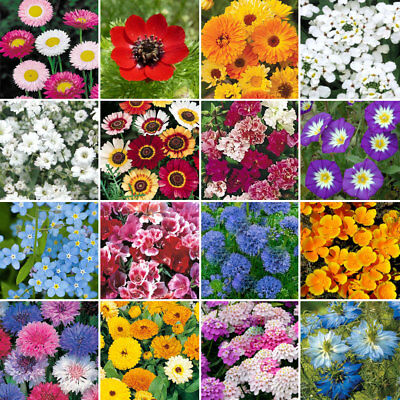 Wild Flower Premium Seed Mix No Grass Meadow Bees & Butterfly | 100% Flowers