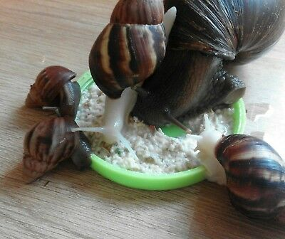 GIANT AFRICAN LAND SNAIL ORGANIC DRY MIX FOOD APPLE AND CARROTS FLAVOUR 50g