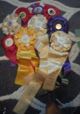 Nine Horse Show Ribbons - New England - 1970's - Early 80's - FREE SHIP