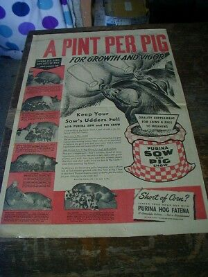 HUGE 1948 Purina sow and pig chow newspaper ad full page