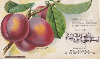 Brown Brothers Co.Reliable Nursery Stock Plumbs Victorian Trade Card Praise List