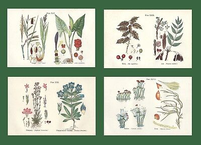 Lot of 4 ORIGINAL ANTIQUE 1913 ANNE PRATT FLOWER PRINTS GRASSES SEDGES FERNS 8
