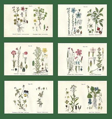 Lot of 6 ORIGINAL ANTIQUE 1913 ANNE PRATT FLOWER PRINTS GRASSES SEDGES FERNS 4
