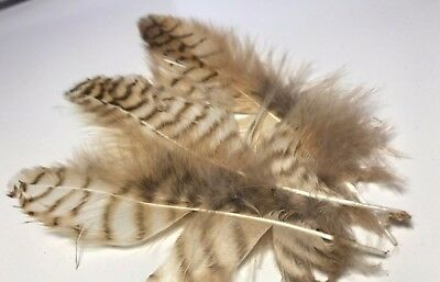 5pcs Delicate Natural Genuine Owl Plumage Feathers 8-12cm DIY Craft Millinery