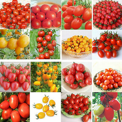Egrow 200Pcs Tomato Seeds Garden Vegetable Planting Red Yellow Black Potted Toma