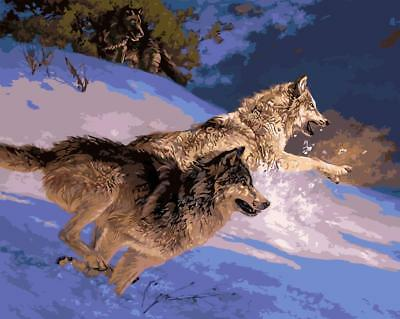 Acrylic Paint By Numbers Kit Canvas 50*40cm Wolf 8026 S4 AU STOCK