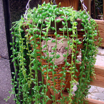 artificial hanging plants fake succulents-greendec string of pearls