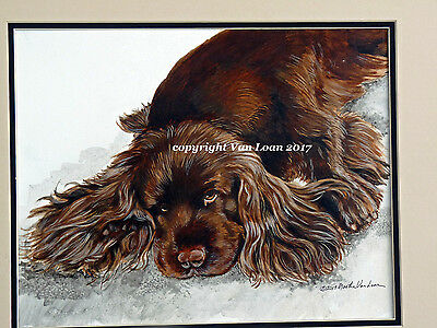 Sussex Spaniel napping limited edition color  signed print 11 x 14