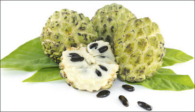 Custard Apple Seed Oil Undiluted 100% Pure Natural Essential Oil 10 to 250 ML