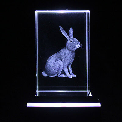 Rabbit 3D LASER ENGRAVED IMAGE BOXED BUNNY LOVER GIRL BIRTHDAY PRESENT GIFT Idea