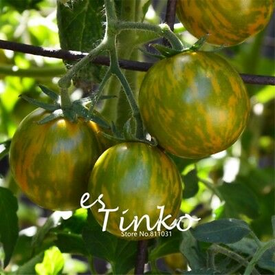 100pcs Green Tomato Seeds Tomato Green Zebra Fruit Vegetable Seeds Garden Plant