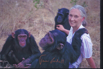 Jane GOODALL (1934)  original sign. photo (20x30cm) / autograph