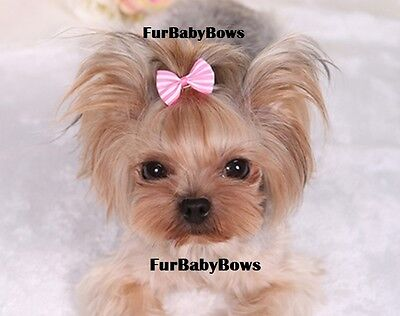 100x PET Puppy grooming dog YORKIE Maltese PET CLIPS  *2 free Exra DOG BOWs