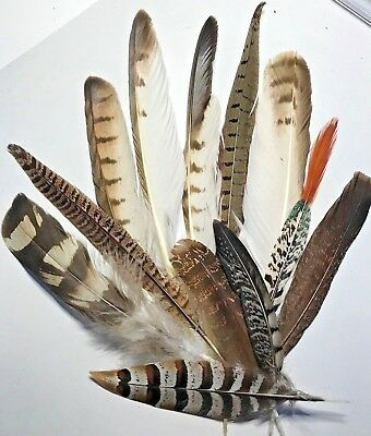 Mix of 12 Natural Owl Eagle Pheasant 10-34cm Feathers DIY Craft Smudge Fan Decor