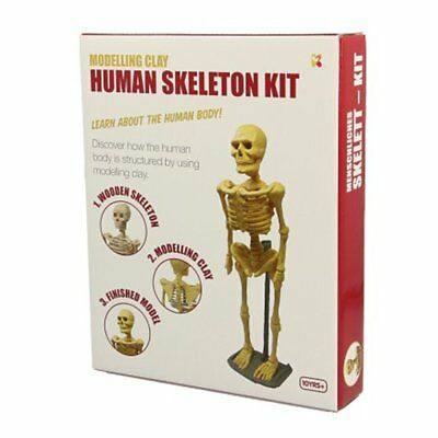 Keycraft Human Skeleton Model Clay Kit - Educational Training
