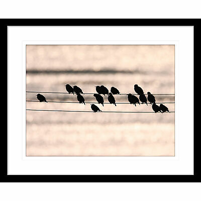 NEW Swallows Song I Framed Print Innovate Interiors Wall Art