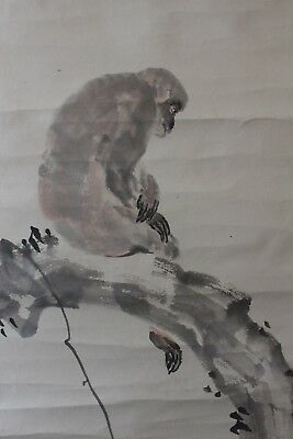 V08R8 ~猿 Cute Resting Monkey~ Japanese hanging scroll