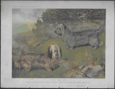 Skye Terrier Pair Dogs Cassell's Antique Chromolithograph c.1890