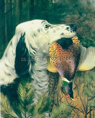 ANTIQUE 8 x 10 PHOTOGRAPH REPRINT ENGLISH SETTER WITH RINGNECK PHEASANT
